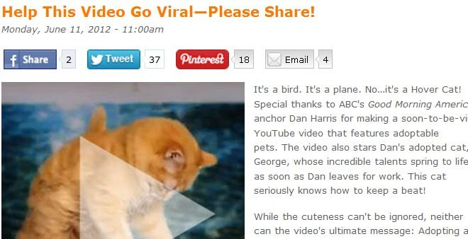 The ASPCA hopes its Hover Cat video will go viral and help animals get adopted in the process. (Source: aspca.org)
