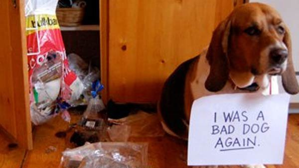 """I was a bad dog again."" (Source: Dogshaming)"
