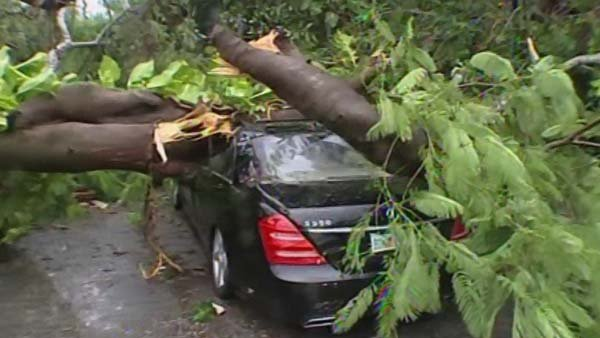 Tropical Storm Isaac downed trees in Miami, damaging property throughout southern Florida. (Source: WSVN/CNN)