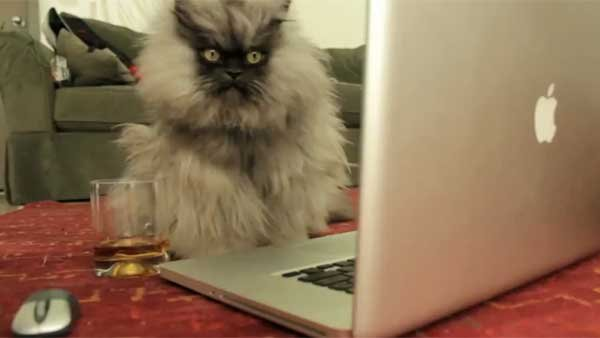 Colonel Meow faces his nemesis on Facebook. (Source: YouTube user ColonelMeow)