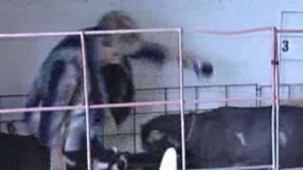 A Florida reporter filming a piece on livestock got more than she bargained for when a goat rammed her and knocked her over. (Source: WWSB/CNN)