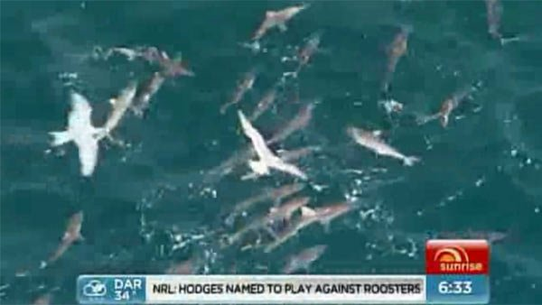 More than 100 sharks take over waters near beaches in on the Western Australia coast Tuesday. (Source: SEVEN NETWORK/CNN)