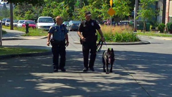 Police departments in Washington are retraining their K-9 units in order to desensitize them to marijuana. (Source: KOMO/CNN)