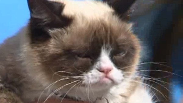 Turn that frown upside down: Grumpy Cat movie in the works
