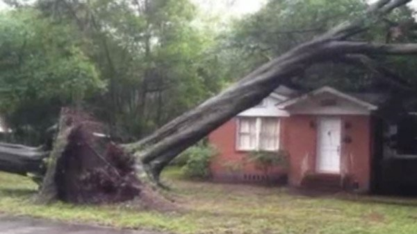 The storm blew over trees in Jacksonville. (Source: WAWS/CNN)