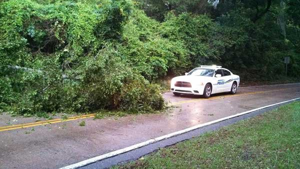 The weakening tropical storm brought a tree down in Wilmington, NC, Friday morning. (Source: RNN)