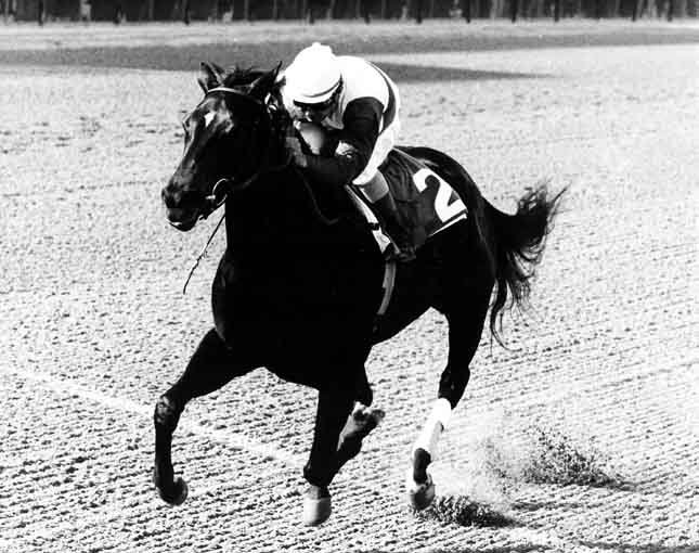 Famed racehorse Ruffian, shown here with jockey Jacinto Vazquez, broke down in a match race July 7, 1975. (Source: Wikimedia Commons)