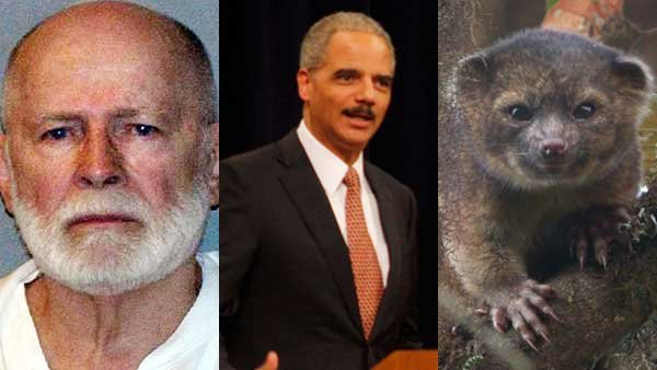 The conviction of an old mob boss, the attorney general's announcement of sentencing reform and the identification of a new mammal all made headlines this week.