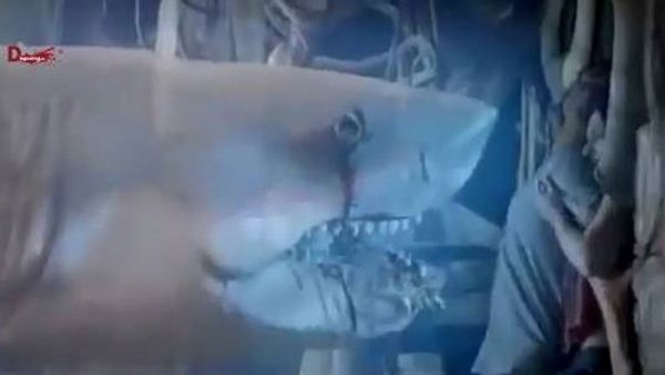 The spirit of a slain shark returns from the dead to wreak bloody vengeance on all humanity. Only from Syfy. (Source: You Tube)