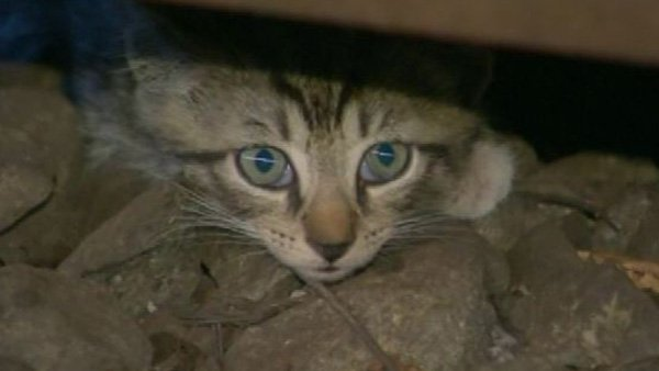 Metropolitan Transportation Authority crews spent two hours searching for the cats but only turned up mice. (Source: WABC/CNN)