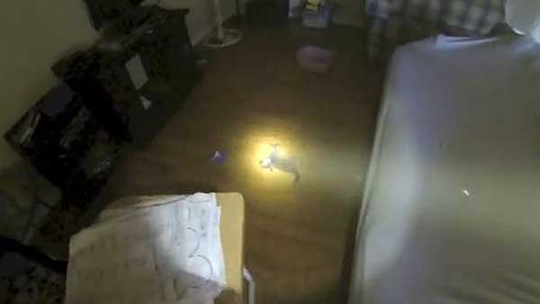 A Fresno firefighter found an unconscious kitten inside a home following a fire. (Source: Cory Kalanick/YouTube)