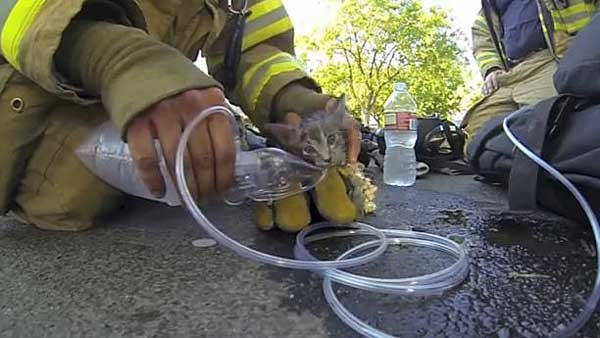 Fresno firefighters resuscitated the kitten with oxygen and water. (Source: Cory Kalanick/YouTube)