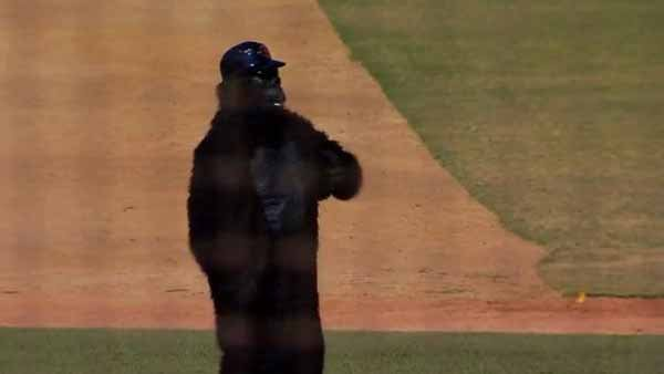 Coach in gorilla suit signals batter to swing away (Source: YouTube)