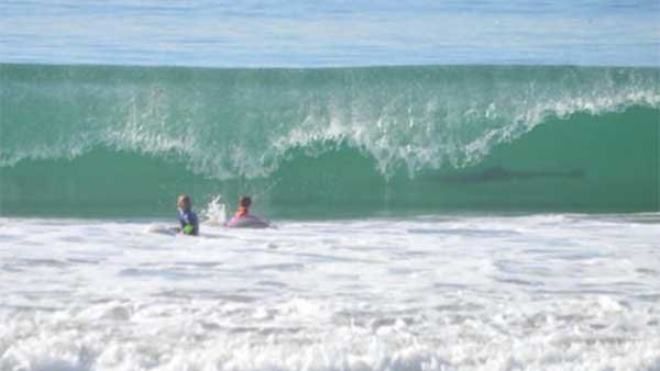 Look in the water...it's a shark! No, wait...it's a dolphin. (Source: June Emerson/CNN)