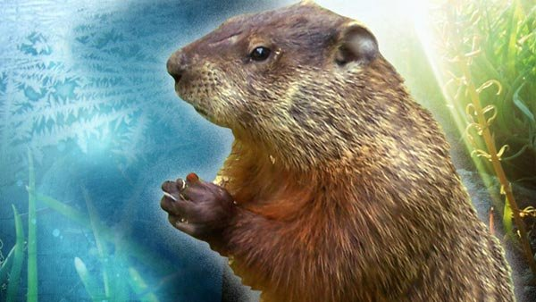 Many hope that Punxsutawney Phil's forecast is the same as it was in 2013 - no shadow, early spring. (Source: MGN photos)