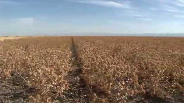 California Gov. Jerry Brown and state legislators announce emergency legislation for the drought-stricken state. (Source: KFTV/CNN)