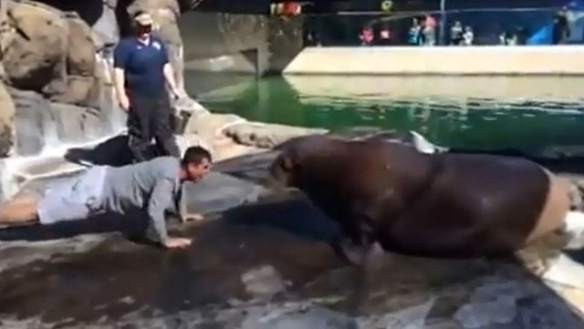 San Francisco 49ers coach Jim Harbaugh may have found some offensive line help on a recent visit to a California Six Flags park. (Source: SFDKLandSeaSky/YouTube)