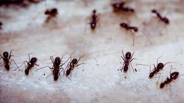 Now that it's springtime, once dormant insects are starting to invade our homes. (Source: WPBN/MGN Online)