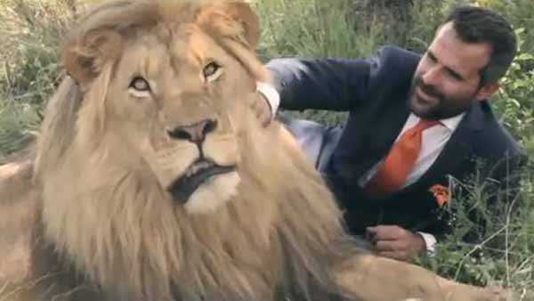 Why would this idiot get dressed up and play with lions? For a commercial, of course. (Source: Van Gils/YouTube)