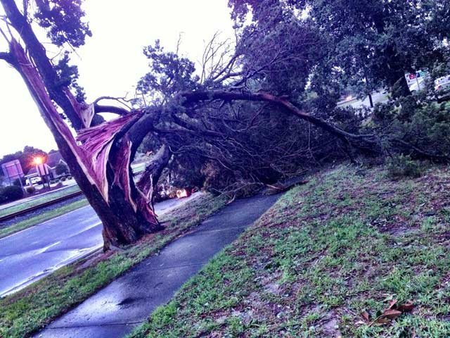 A tree in Morehead City, NC, was split in half by Hurricane Arthur, which struck the state late Thursday and early Friday. (Source: Mark Davenport/WBTV)