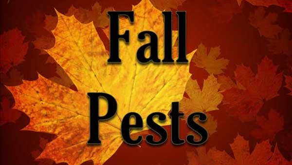 The cooler weather of fall brings in some new pests looking for a warm place to stay. (Source: MGN Online)