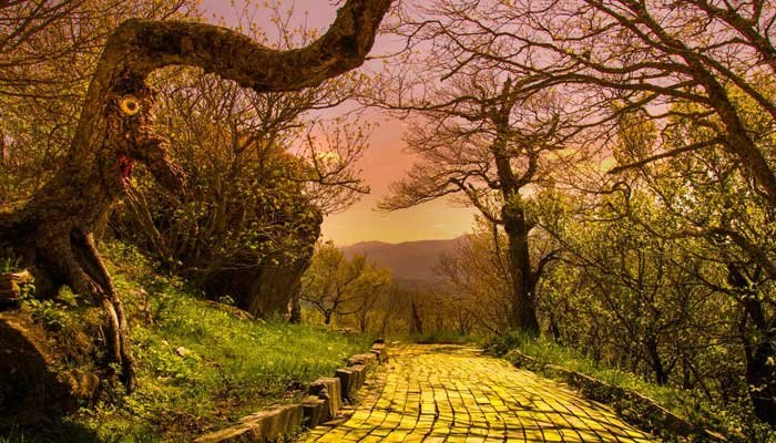 The yellow brick road in the Land of Oz offers a stunning view of the North Carolina mountains - and tree creatures with no one left to scare. (Source: Seph Lawless).
