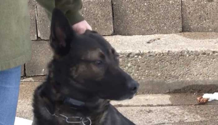 Happy ending: Retired police officer gets to keep K-9 partner