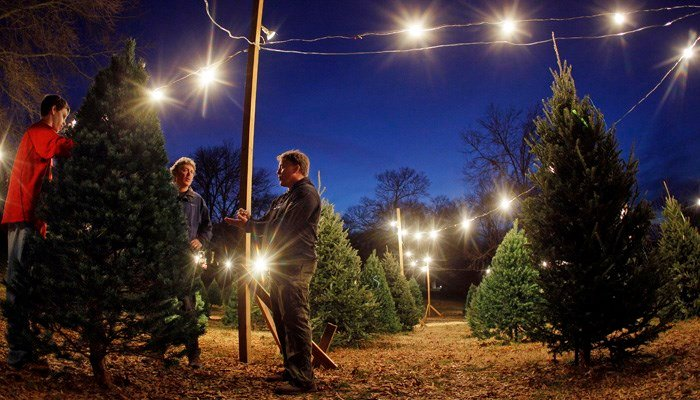 The online retailer will be selling and delivering 7-foot firs and pines. (Source: AP Photo/Mark Humphrey)