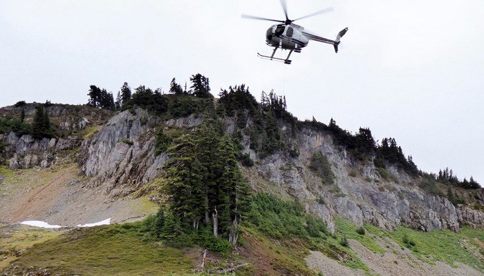 Helicopters and trucks are relocating hundreds of mountain goats from Olympic National Park. (Source: Washington Dept. of Fish & Wildlife via AP)